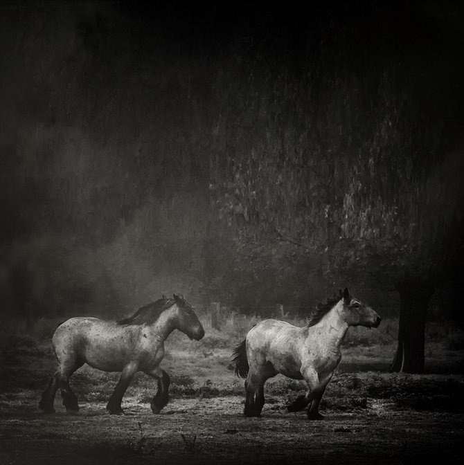Фотограф Piet Flour 41