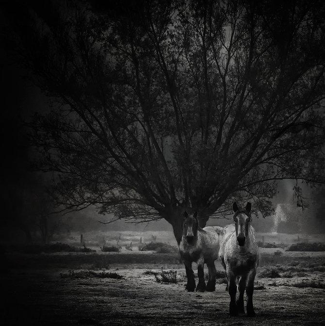 Фотограф Piet Flour 42