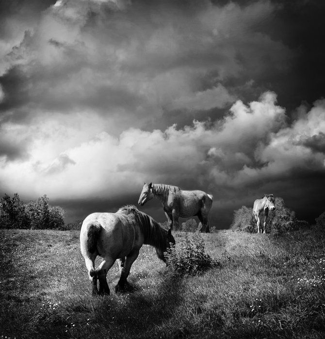 Фотограф Piet Flour 51