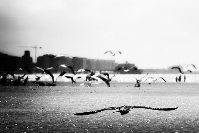 Фотограф Piet Flour 6