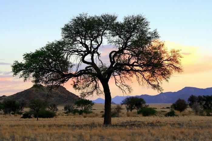 Намибия - страна двух пустынь 45880