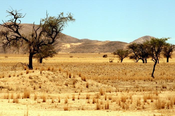 Намибия - страна двух пустынь 83545