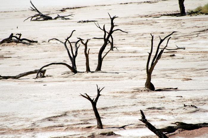 Намибия - страна двух пустынь 76678