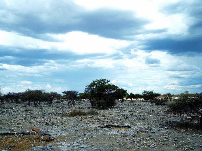 Намибия - страна двух пустынь 97278