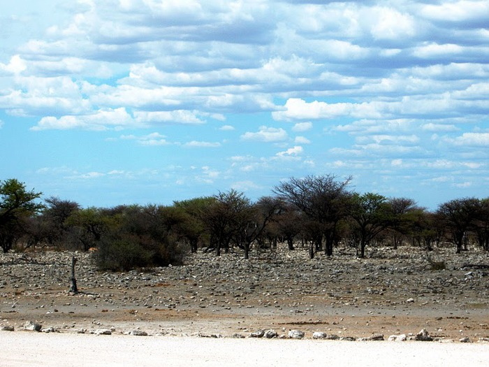 Намибия - страна двух пустынь 79668