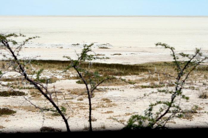 Намибия - страна двух пустынь 88973