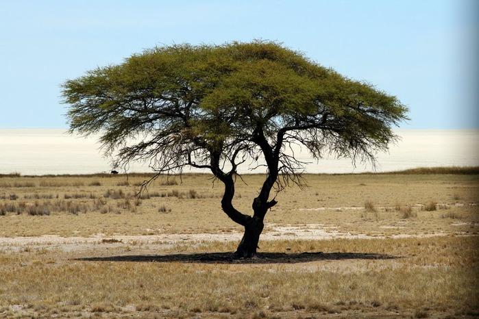 Намибия - страна двух пустынь 96165