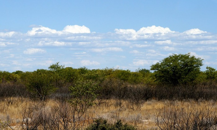 Намибия - страна двух пустынь 87692