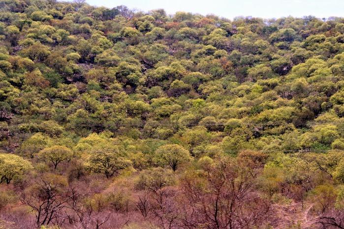 Намибия - страна двух пустынь 89238