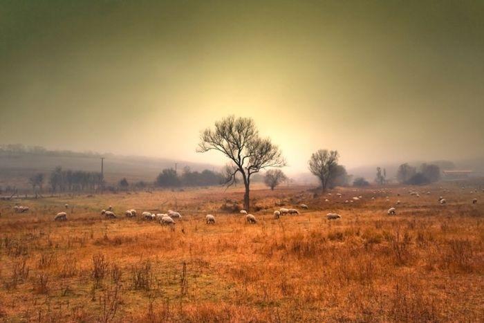 Пейзажи фотографа Dam Dobrovits 25