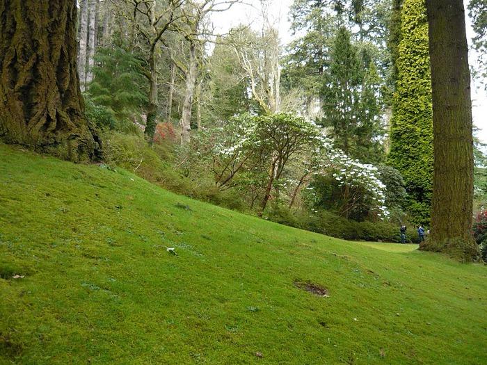 образцовый сад – волшебный Bodnant Garden 25238