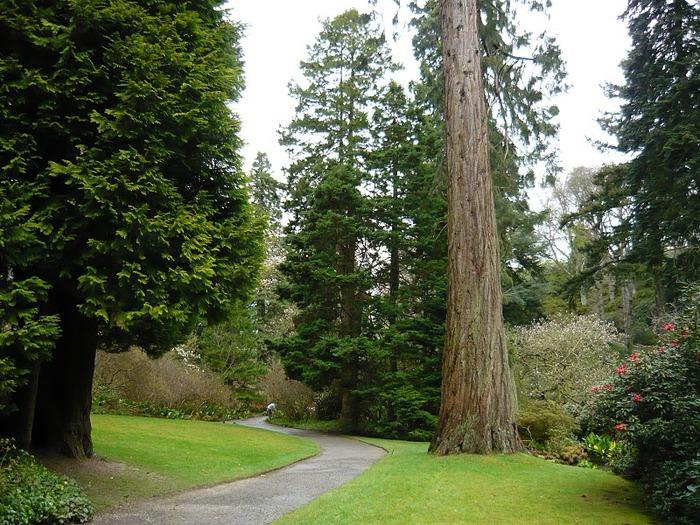 образцовый сад – волшебный Bodnant Garden 24140