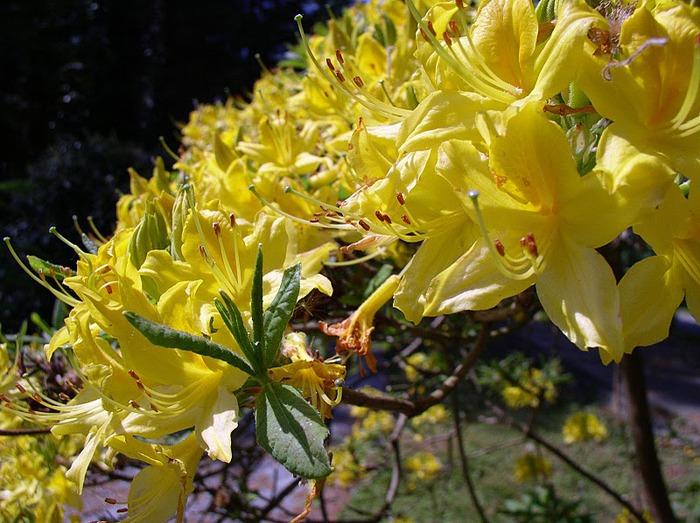образцовый сад – волшебный Bodnant Garden 58791