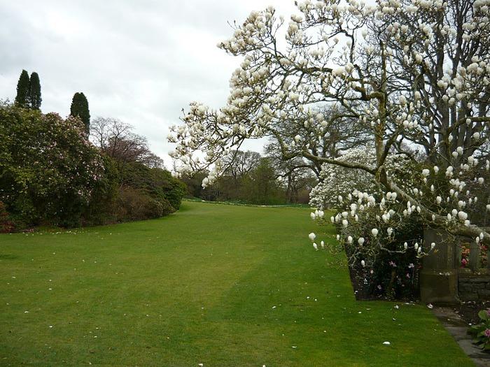 образцовый сад – волшебный Bodnant Garden 12191