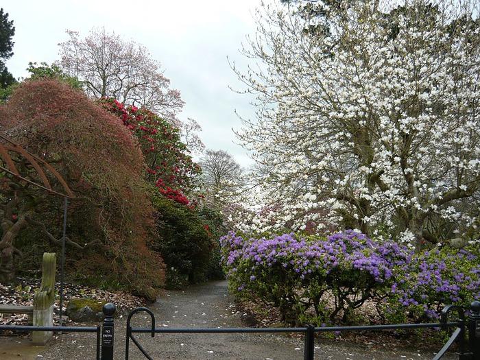 образцовый сад – волшебный Bodnant Garden 39311