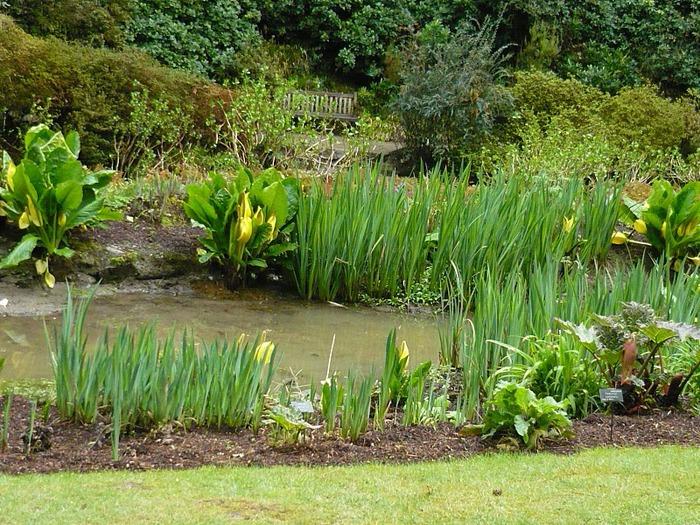 образцовый сад – волшебный Bodnant Garden 37810