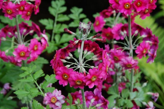 образцовый сад – волшебный Bodnant Garden 79487