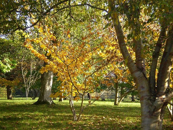 образцовый сад – волшебный Bodnant Garden 99246