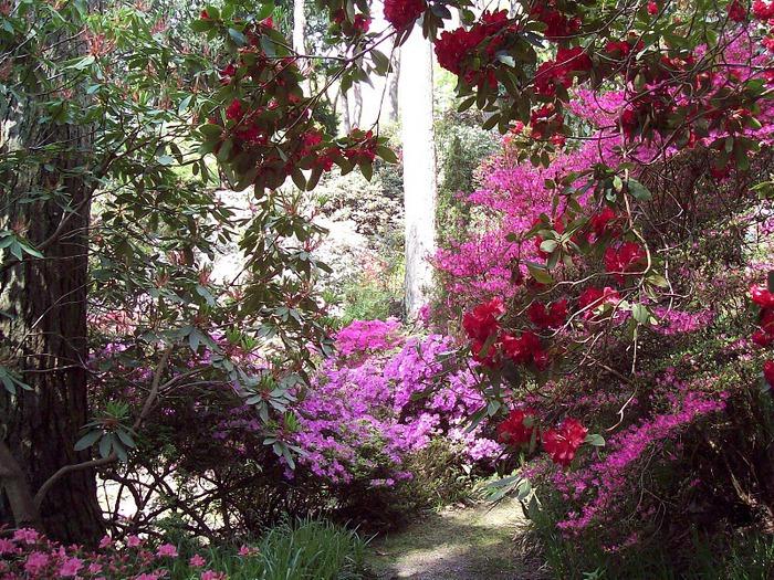 образцовый сад – волшебный Bodnant Garden 57743