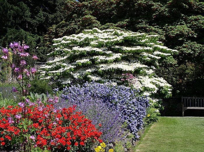 образцовый сад – волшебный Bodnant Garden 43338