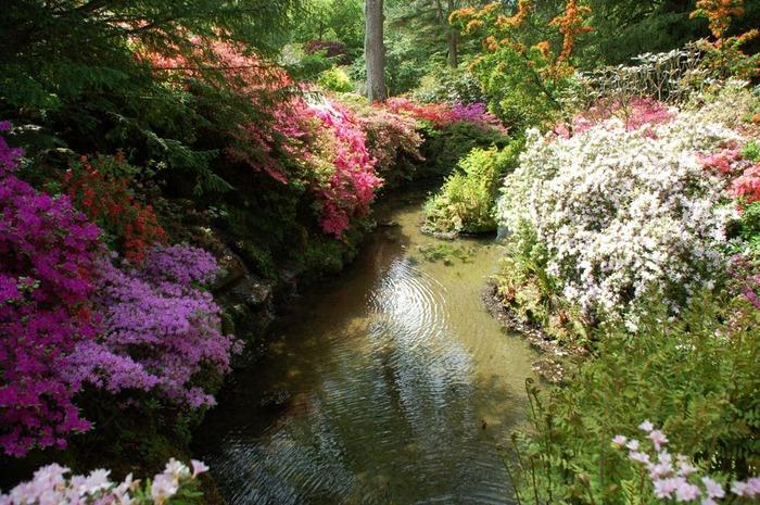 образцовый сад – волшебный Bodnant Garden 57485