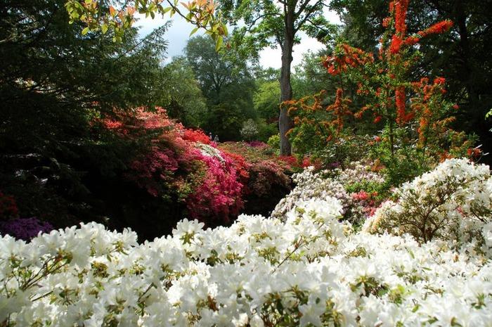 образцовый сад – волшебный Bodnant Garden 27775