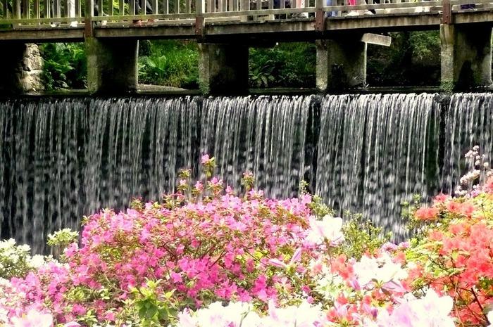 образцовый сад – волшебный Bodnant Garden 21358