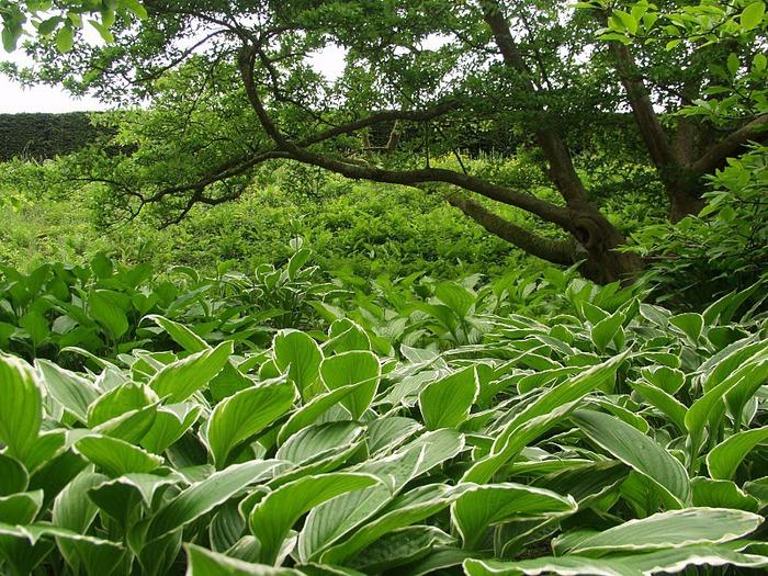 образцовый сад – волшебный Bodnant Garden 85838