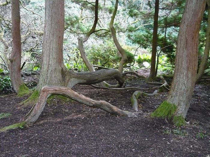 образцовый сад – волшебный Bodnant Garden 77242