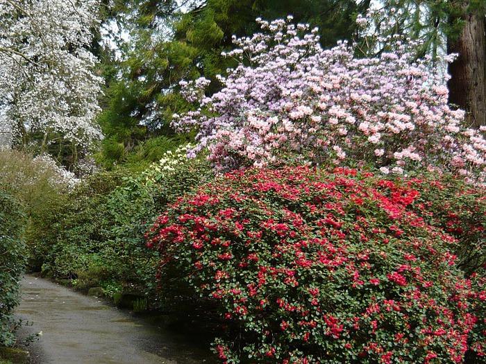 образцовый сад – волшебный Bodnant Garden 29727