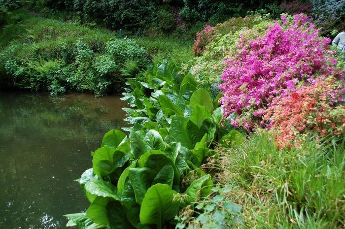 образцовый сад – волшебный Bodnant Garden 80072