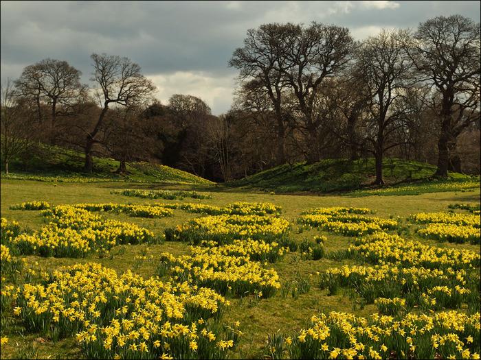 образцовый сад – волшебный Bodnant Garden 31459