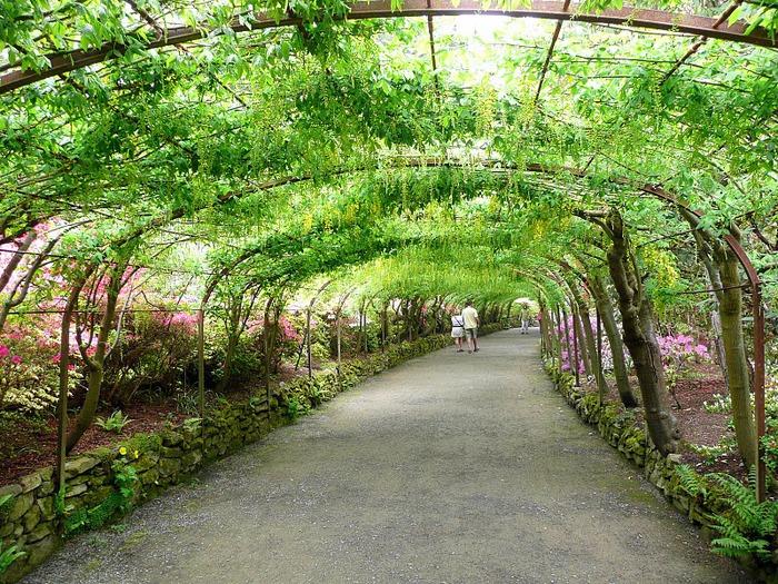 образцовый сад – волшебный Bodnant Garden 79131