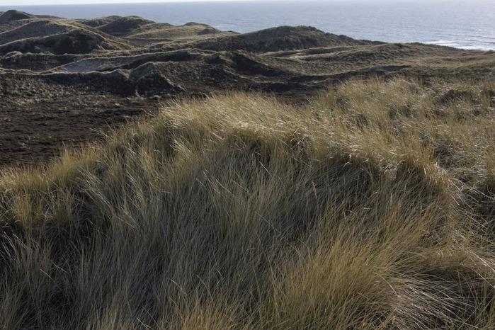 Зюльт: остров дюн и устриц 31095