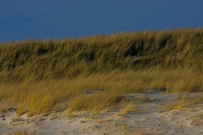 Зюльт: остров дюн и устриц 92833
