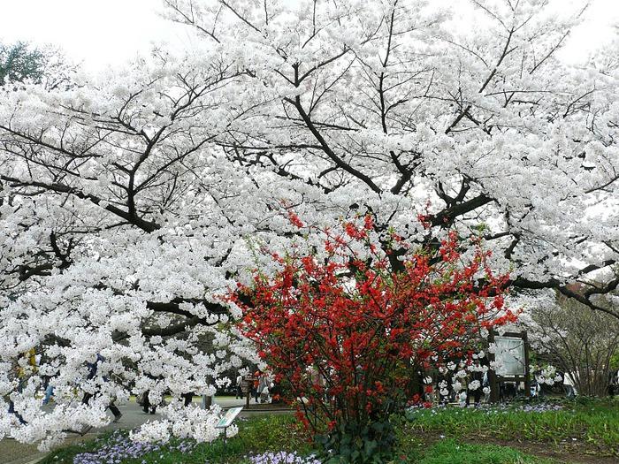 Shinjuku Gyoen - Парк Синдзюку 16602