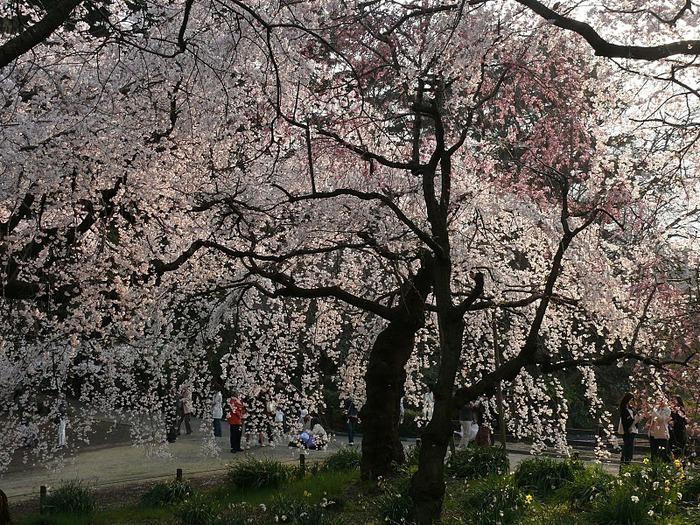 Shinjuku Gyoen - Парк Синдзюку 28798