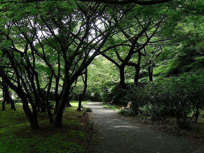Shinjuku Gyoen - Парк Синдзюку 98143