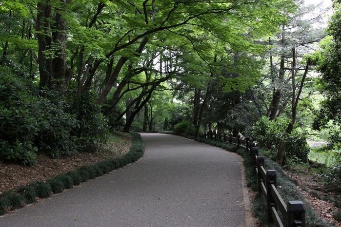 Парк Синдзюку - один из наиболее огромных парков Токио 9