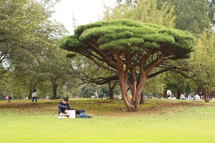 Парк Синдзюку - один из наиболее огромных парков Токио 10