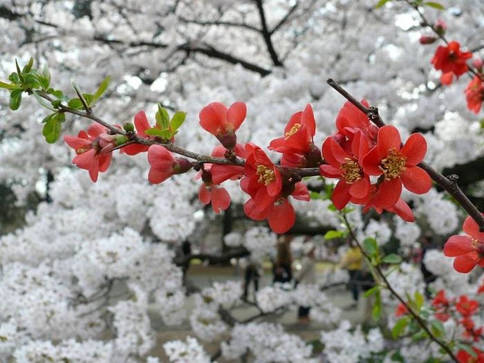 Парк Синдзюку - один из наиболее огромных парков Токио 18