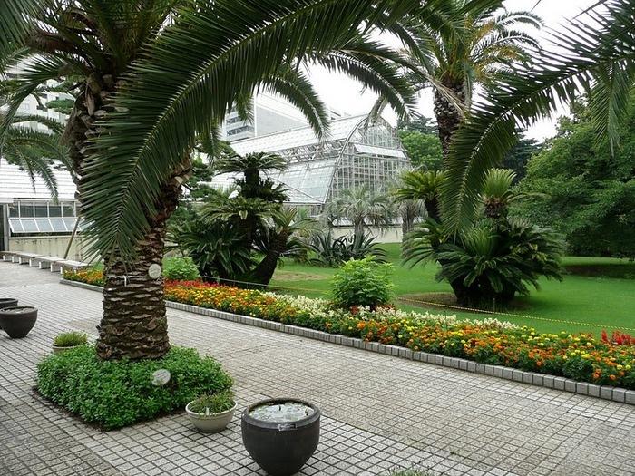 Парк Синдзюку - один из наиболее огромных парков Токио 22