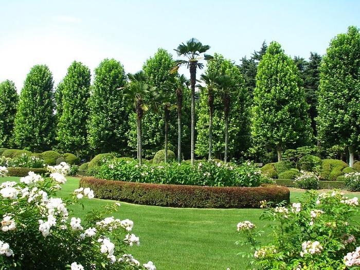 Парк Синдзюку - один из наиболее огромных парков Токио 25