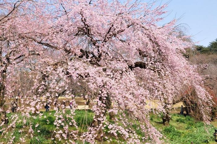 Парк Синдзюку - один из наиболее огромных парков Токио 1