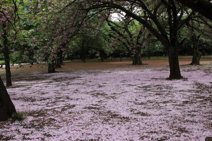 Парк Синдзюку - один из наиболее огромных парков Токио 7