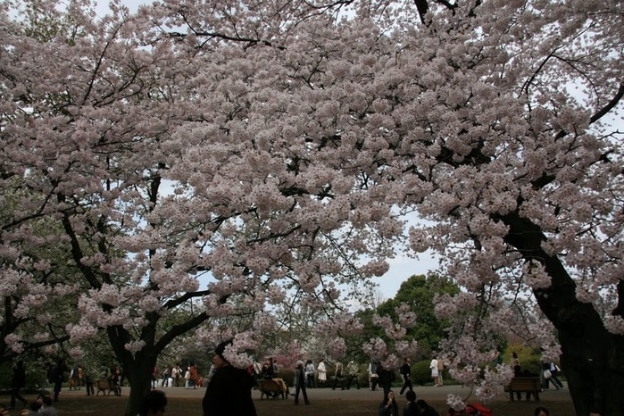 Парк Синдзюку - один из наиболее огромных парков Токио 8