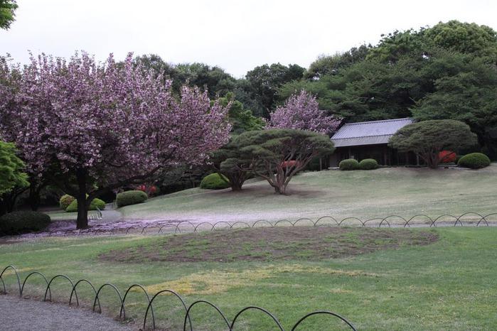 Shinjuku Gyoen - Парк Синдзюку 48734