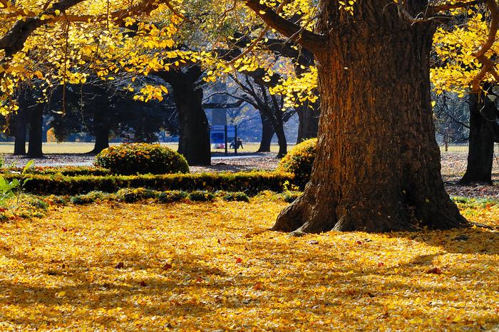 Shinjuku Gyoen - Парк Синдзюку 16323