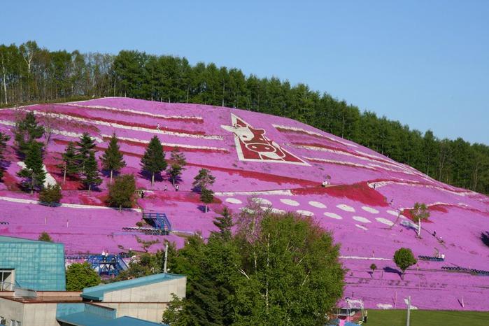 http://img1.liveinternet.ru/images/attach/c/1//63/953/63953567_Higashimokoto_Shibazakura_Park0003.jpg