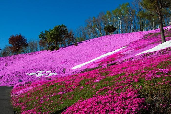 Higashi Mokoto Shibazakura Park 11052
